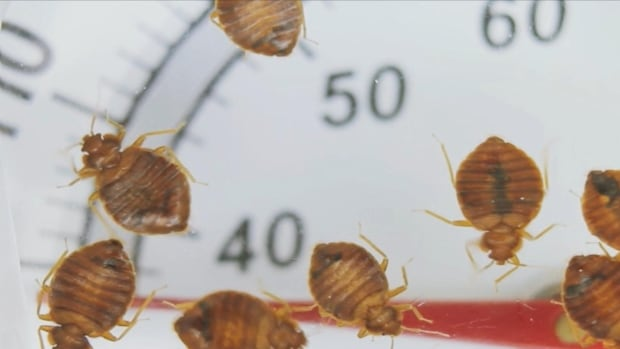 Family says bed bugs reduced from 400 to two over nine days.