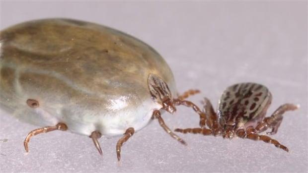 Winter ticks