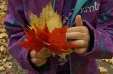 Fall colours foliage good year Gatineau Hills Oct 2014