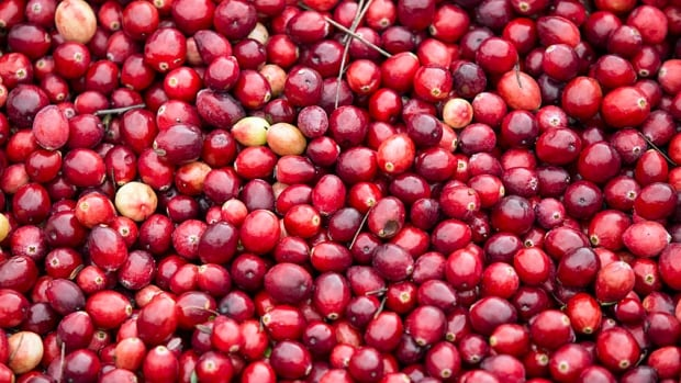 The president of the Cranberry Association of Newfoundland and Labrador is hopeful that a secondary processing facility will be operation by the fall of 2016.