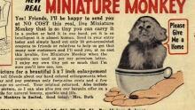monkey620