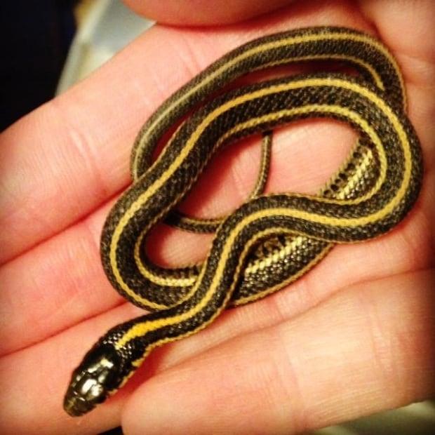 Tiny garter snake