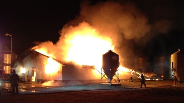 1,000 chicks die in barn fire at Swift Current, Sask ...