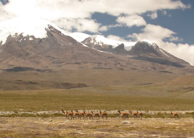 Vicunas Pucuncho Basin