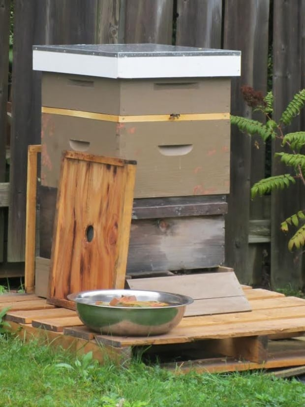 Melissa Krone backyard beehive