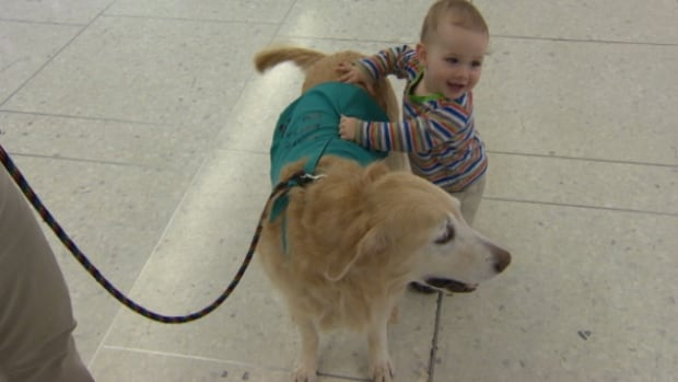 Passengers of all ages are encouraged to pet the dogs at the Edmonton International Airport.