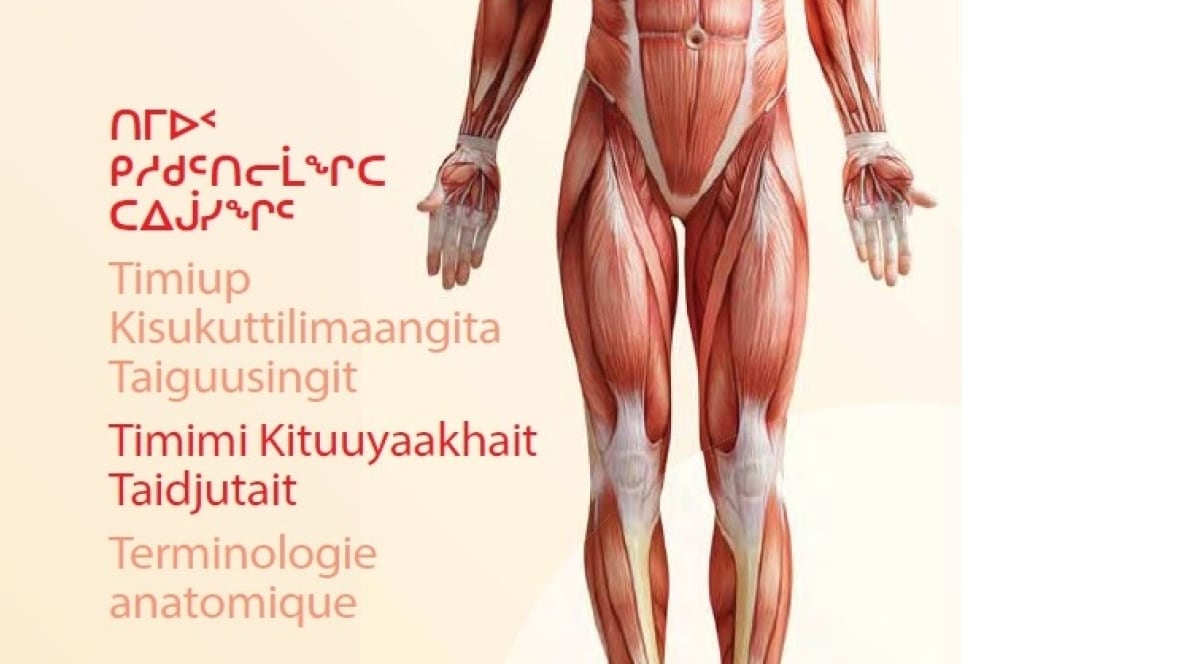 Nunavut releases human anatomy glossary in 4 languages | CBC News