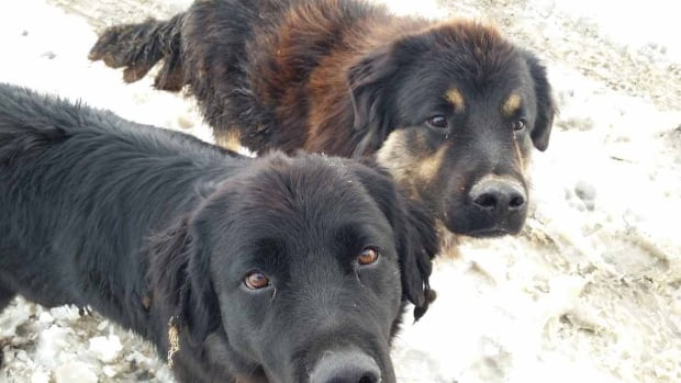 Dogs rescued by AARCS