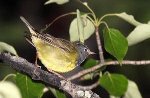 Breednig Bird Atlas