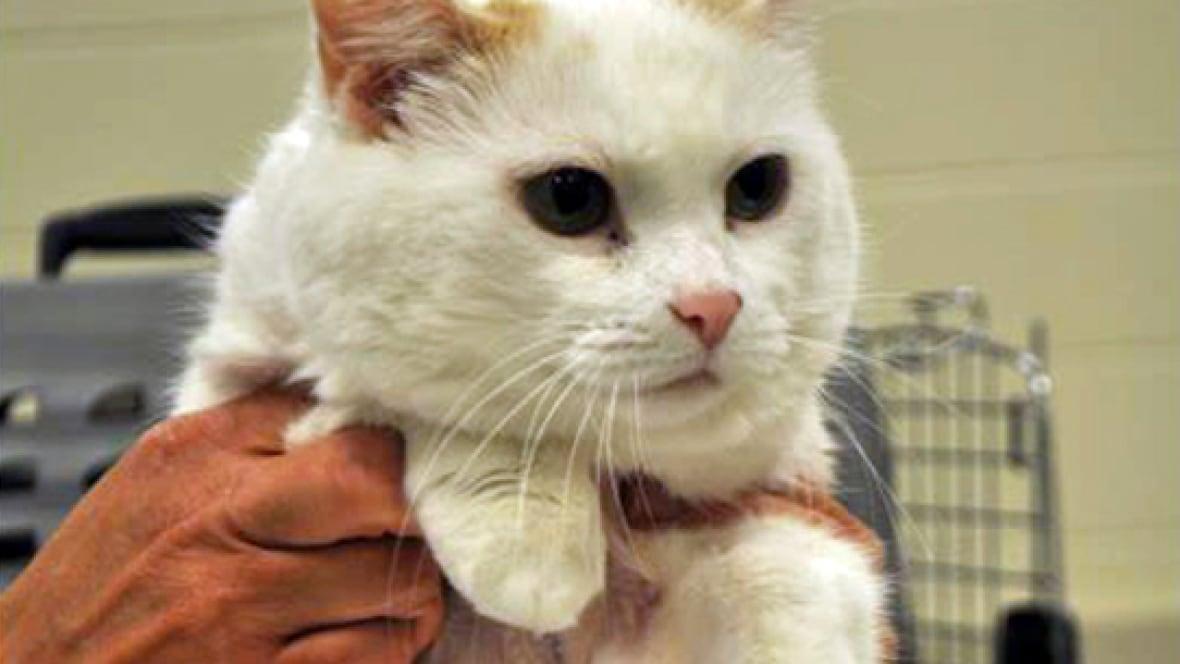 Cats Kamloops
