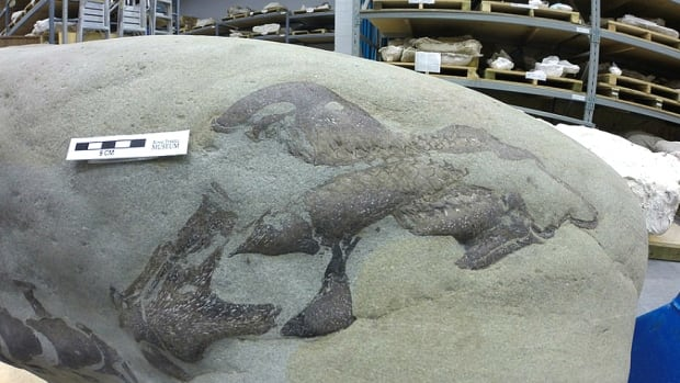 partial-dinosaur-skull-at-royal-tyrrell-museum.jpg