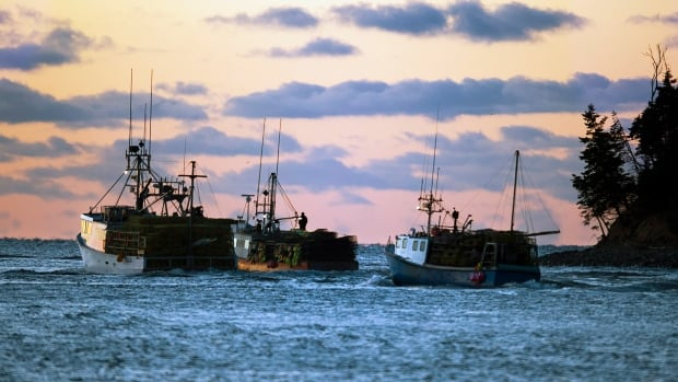 Fishing boats loaded with lobster traps head out from Eastern Passage, N.S., in 2012.