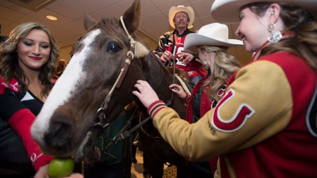 Tuffy gets an apple as he visits a hotel as part of Calgary Stampeders' Grey Cup festivities in downtown Vancouver on Nov. 28, 2014.