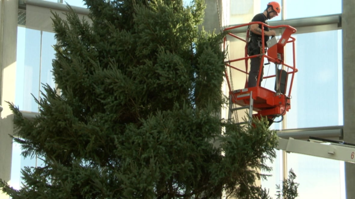 Tall Christmas Tree Installed At National Gallery Of