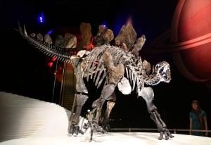 Stegosaurus Natural History Museum