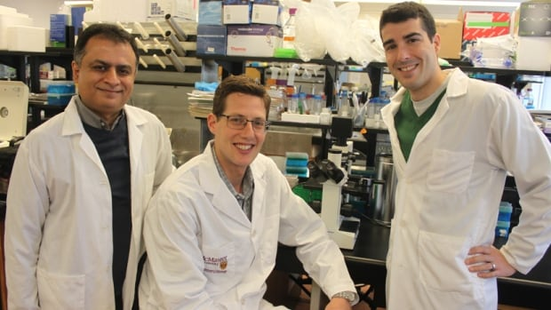 From left to right: co-authors Waliul Khan, associate professor of pathology and molecular medicine and Gregory Steinberg, professor of medicine, with lead author and post-doctoral fellow, Justin Cran. Their study, published Monday in Nature Medicine, shows how limiting serotonin could release the 'parking brake' on brown fat.