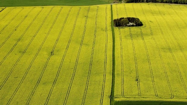 Most of Canada's canola is grown in Alberta, Saskatchewan and Manitoba.