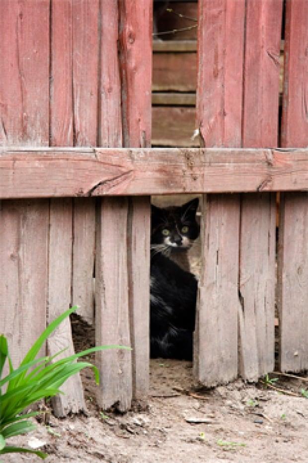 Free-roaming cats often appear hidden