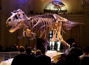 Sue Tyrannosaurus rex Field Museum