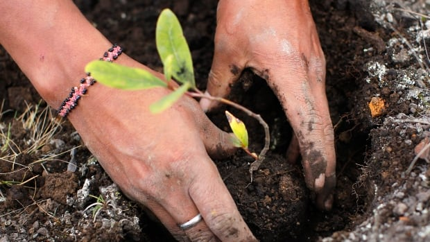 Several weeks after bringing the body to be composted at an Urban Death Project facility, the mourners would return to collect some of the resulting soil 'to grow a memorial garden or plant a tree.'
