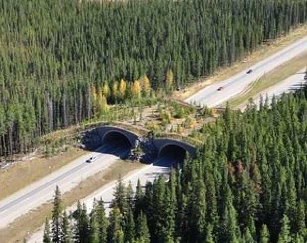 Trans-Canada Highway in Banff National Park