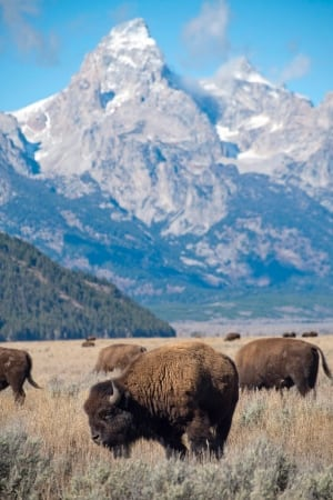 Wyoming Daily Life