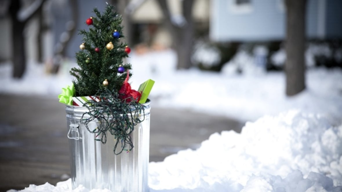 Christmas Tree Collection Portsmouth : Montreal christmas tree collection underway