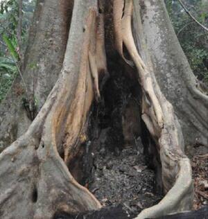 Meliandou tree stump Ebola first case