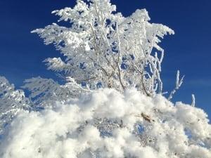 Alberta hoar frost weather