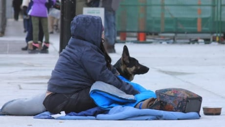 Pets of people experiencing homelessness are as well taken care of as any other animals, study indicates