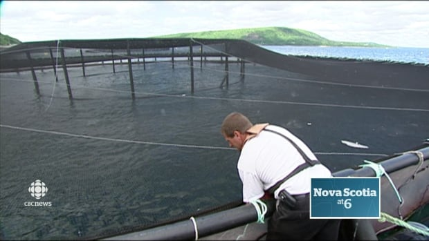The report also says there is a place for fish farms in Nova Scotia and that the competing interests can be balanced.