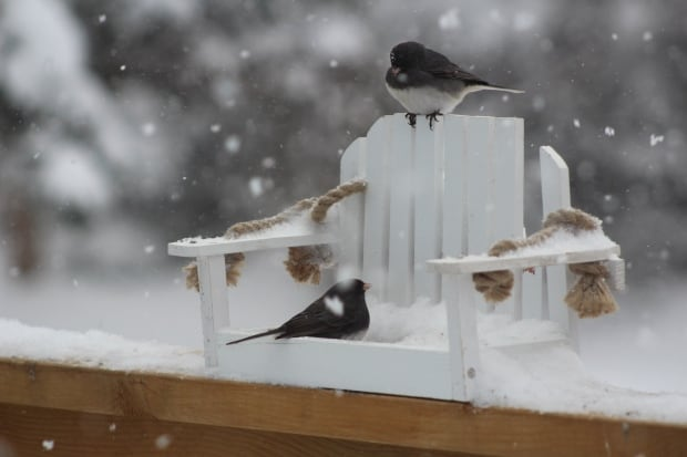 Birds in a deck chair by Melanie Raymond