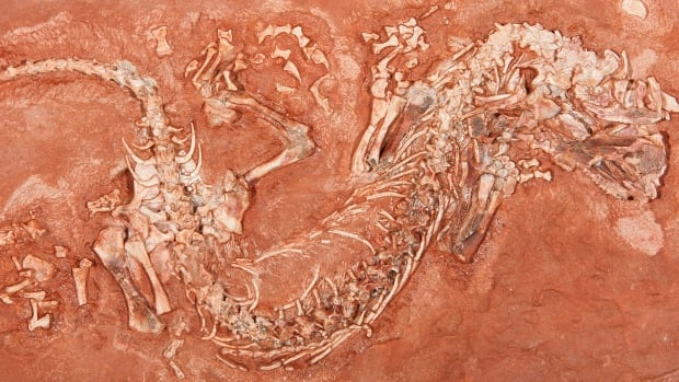 The newly discovered ancient reptile has been named Erpetonyx arsenaultorum after the family of Michael Arsenault of Prince County, P.E.I., who found the fossil on a beach when he was a young boy.
