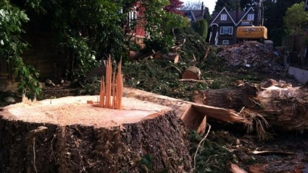 Eagle tree chopped