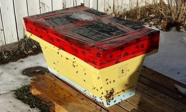 Calgary bees
