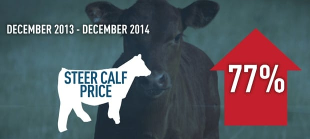 Alberta calf prices