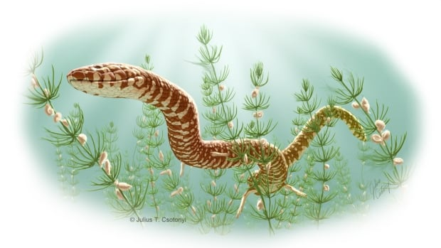 The ancient snake Parviraptor estesi, which lived during the Upper Jurassic or Lower Cretaceous, swims in freshwater lake in Swanage, England, in this artist's representation.