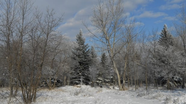 One Saskatoon woman is speaking up to save this forest on outskirts of the city.