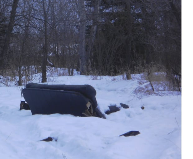 Couch in forest
