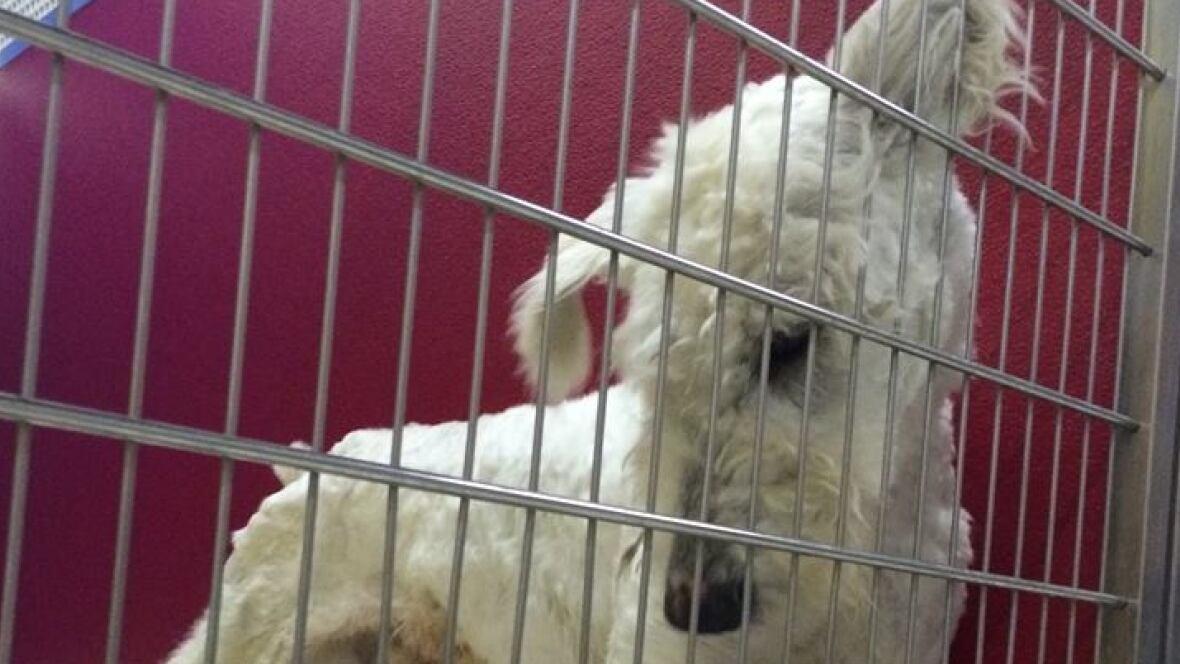 Hamilton Dog Rescue Centre
