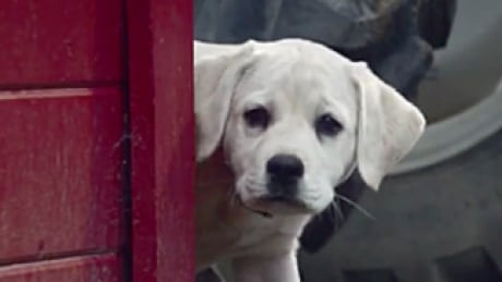 Super Bowl Commercials 2015 Budweiser Puppy