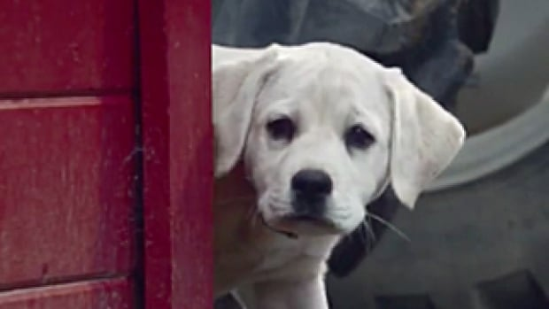 Budweiser brought the cute factor to football once again this year with a heart-warming 2015 Super Bowl commercial that makes a strong case for the phrase 'if it's not broken, don't fix it.'