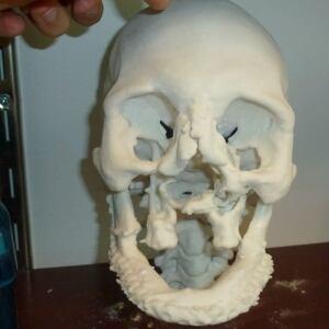 3D printed facial model