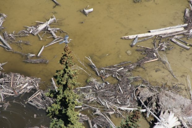 Mount Polley spill heron