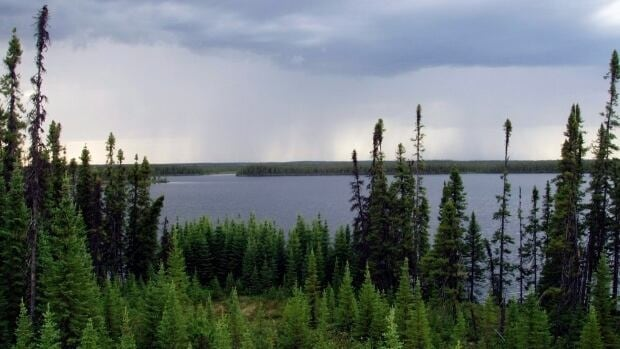 A extensive review of studies published in the journal Science found that the boreal forest can't migrate north fast enough to outpace the impacts of a changing climate.