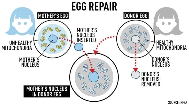 sperm live Conception