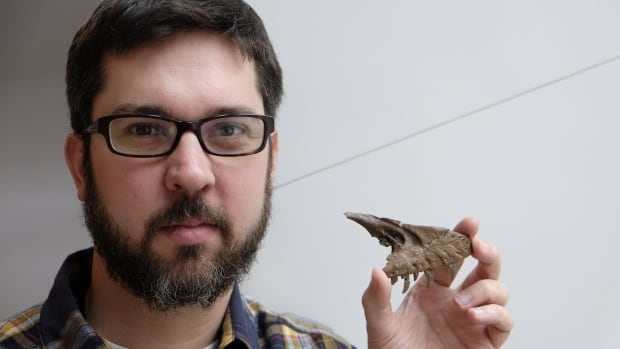 David Evans, a paleontologist and curator at the Royal Ontario Museum, holds part of the skull of Acheroraptor, which the ROM purchased from a private collector.