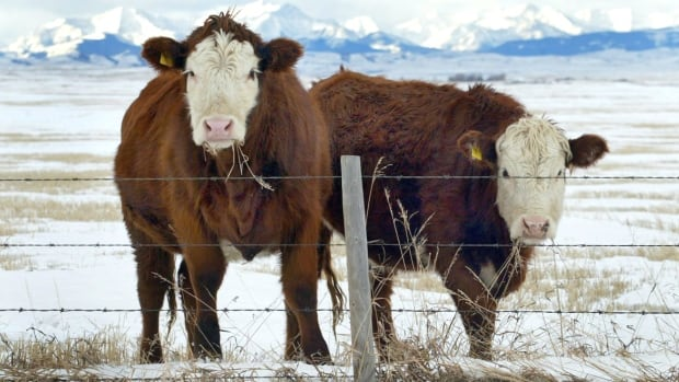 Mexico will re-open its borders to Canadian beef at the end of October, after reaching a deal earlier this year to end a BSE-related ban imposed in 2003.