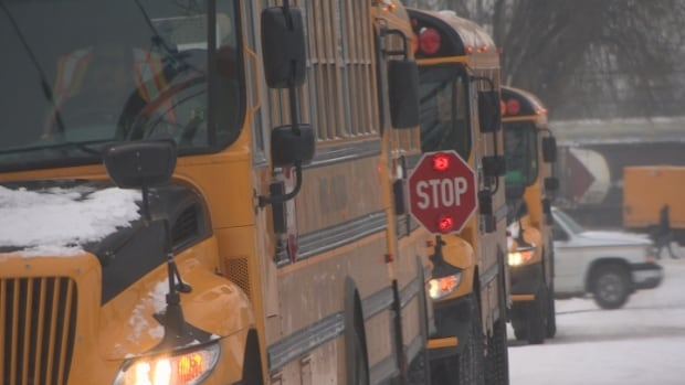 Results of a pilot program show 11 per cent of prairie drivers drive by a stopped bus even when its stop sign is extended.