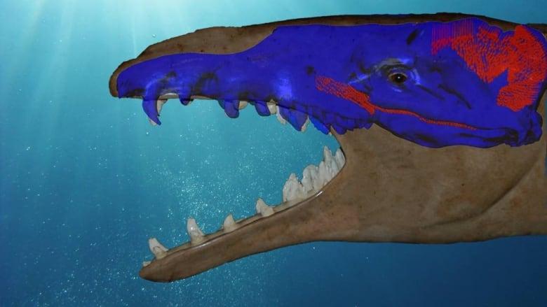 A Whale of a Bite | CBC Radio